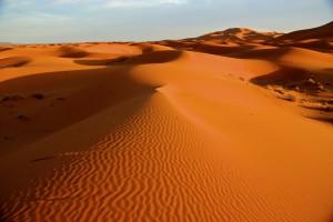 Saharas sanddyner i morgonsol